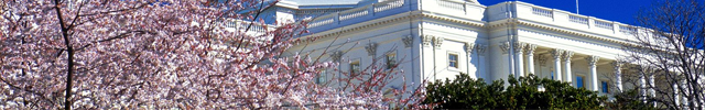 Cherry Blossoms with Building
