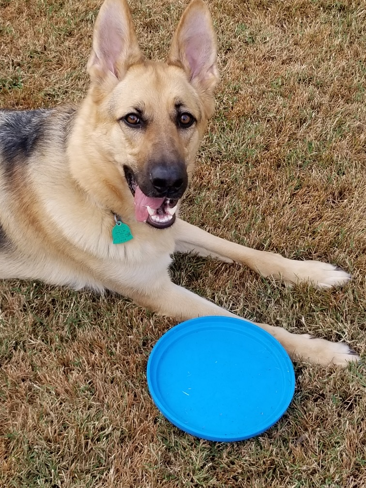 Frisbowl with Duchess dog