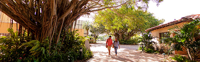 Stetson students walk in Banyan Courtyard on Gulfport campus