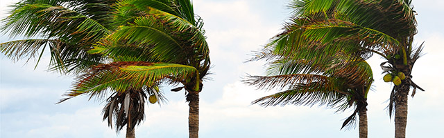 media/palm-trees-in-wind-web.jpg