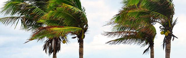 media/palm-trees-in-wind-web.jpg