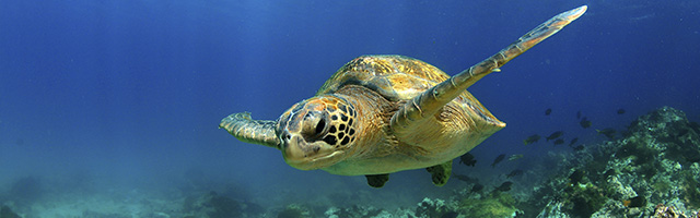 media/sea-turtle-web-640-200.jpg