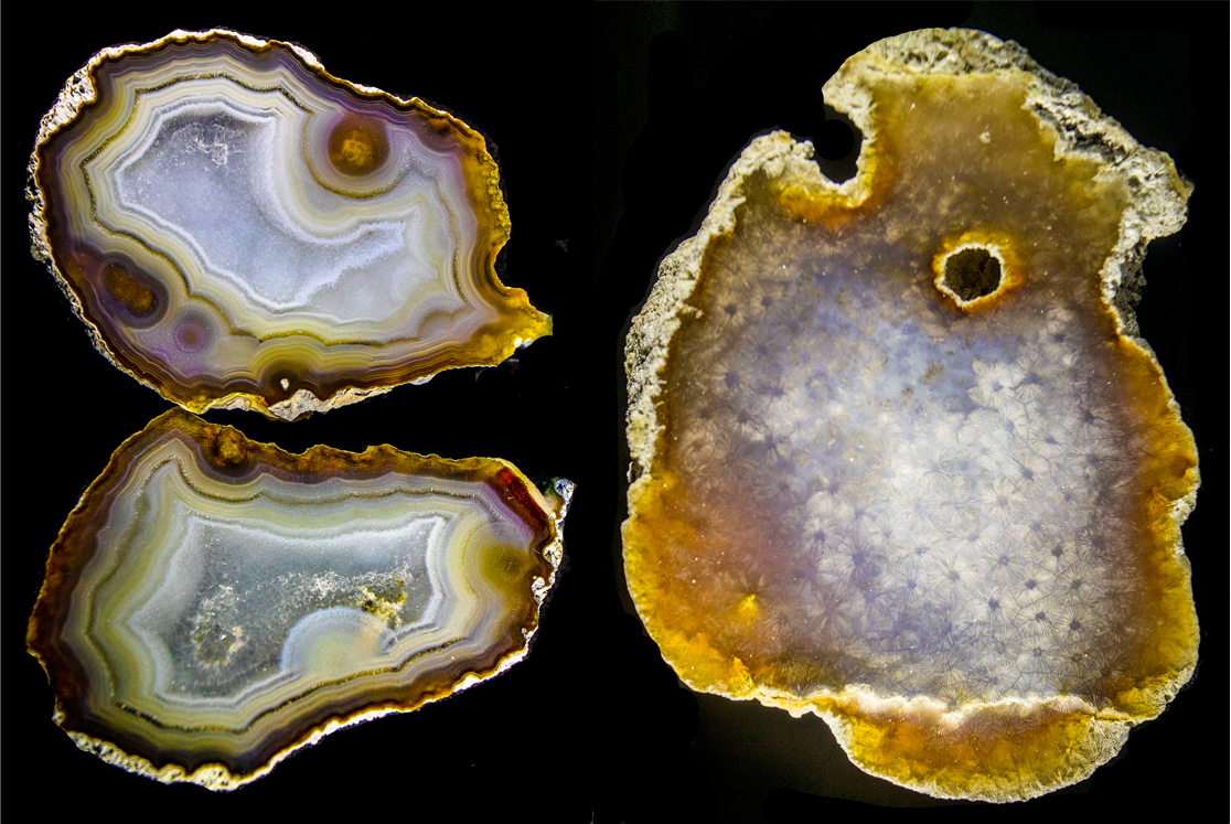 Agatized and silicified coral