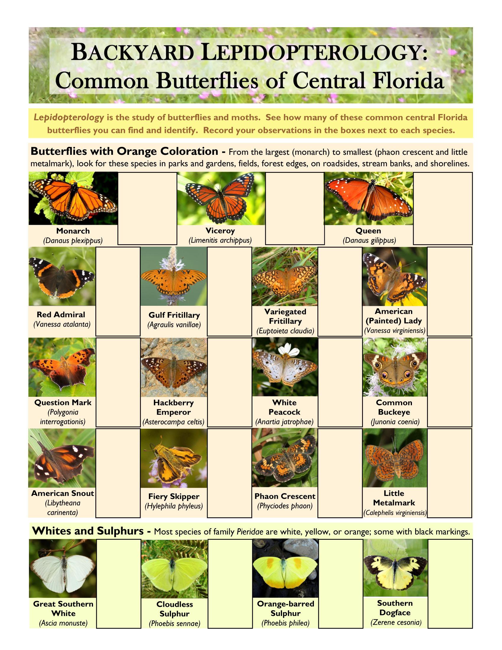 Backyard Lepidopterology