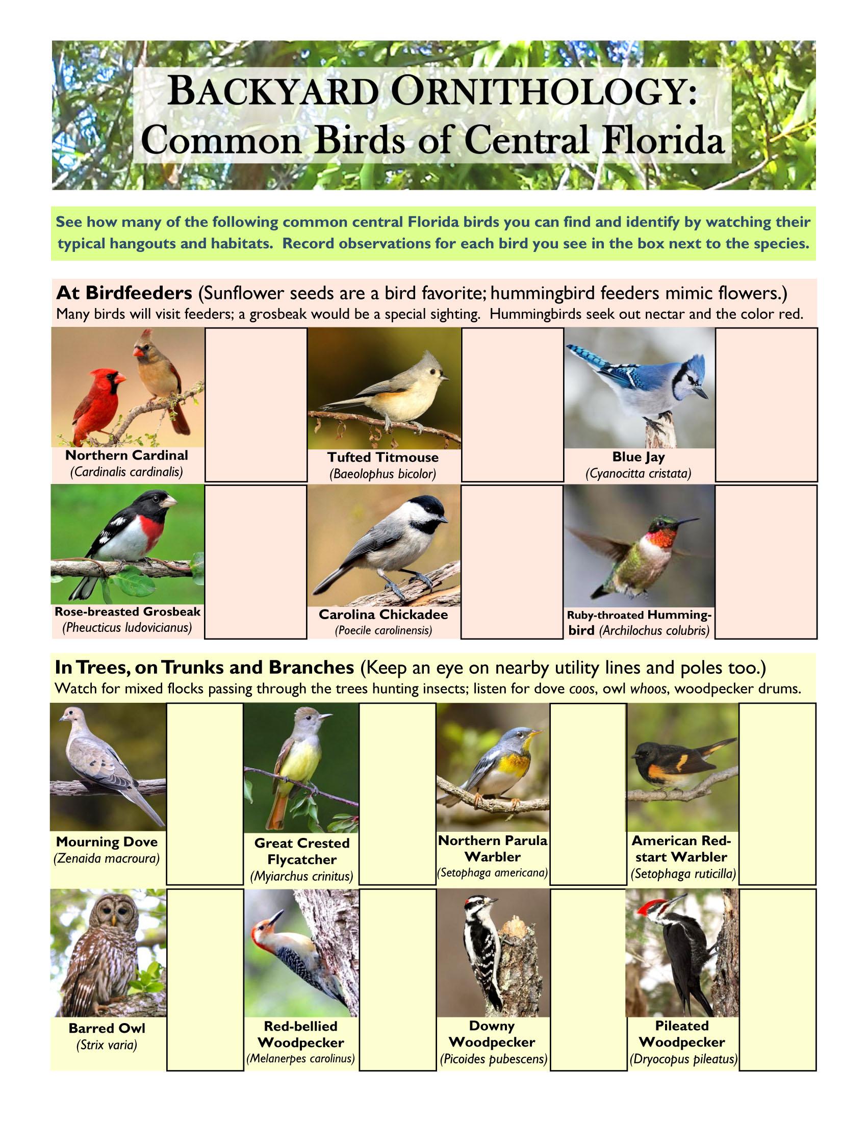 Backyard Ornithology