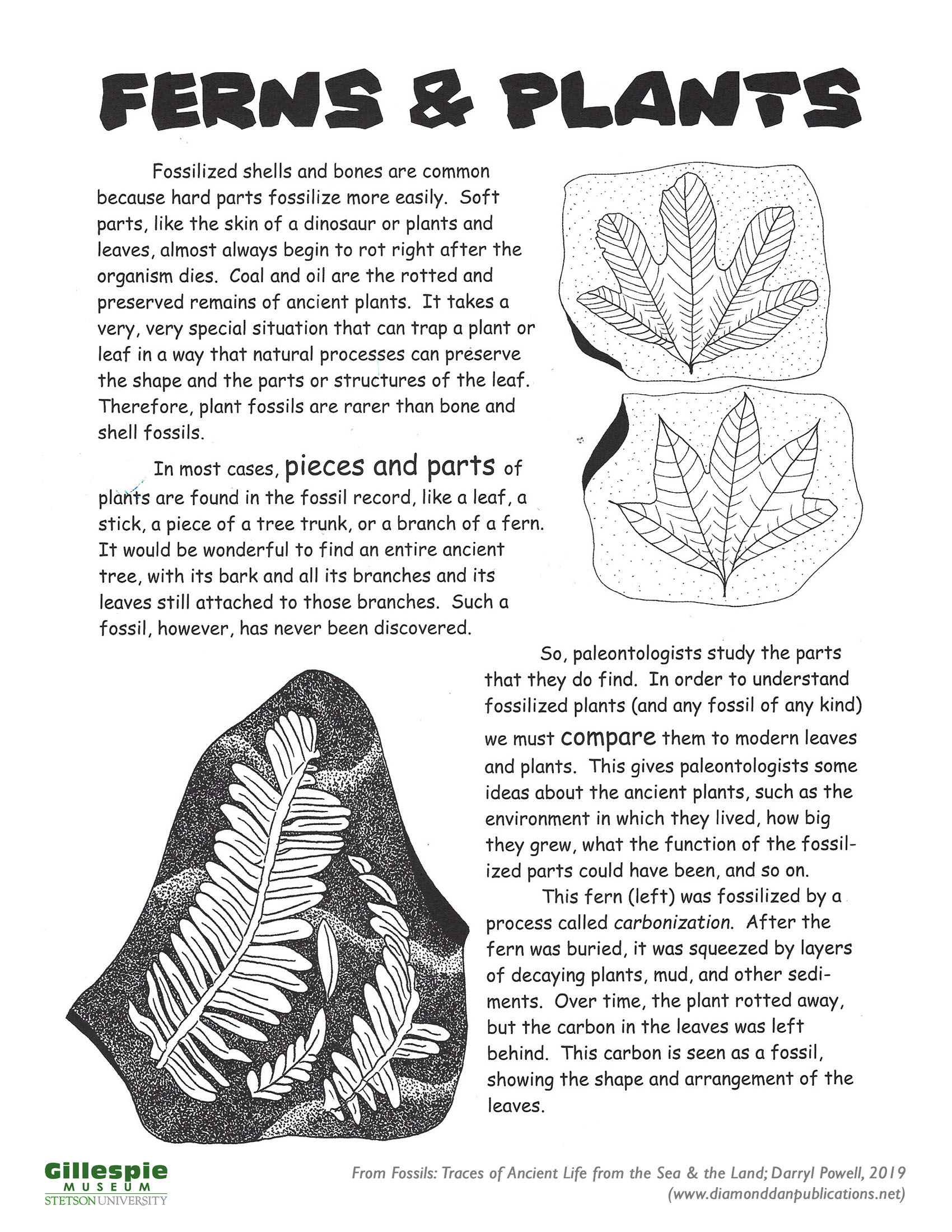 fern and plant fossils