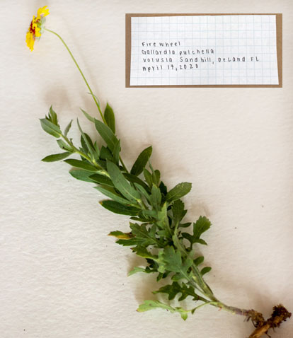 Herbarium How-to