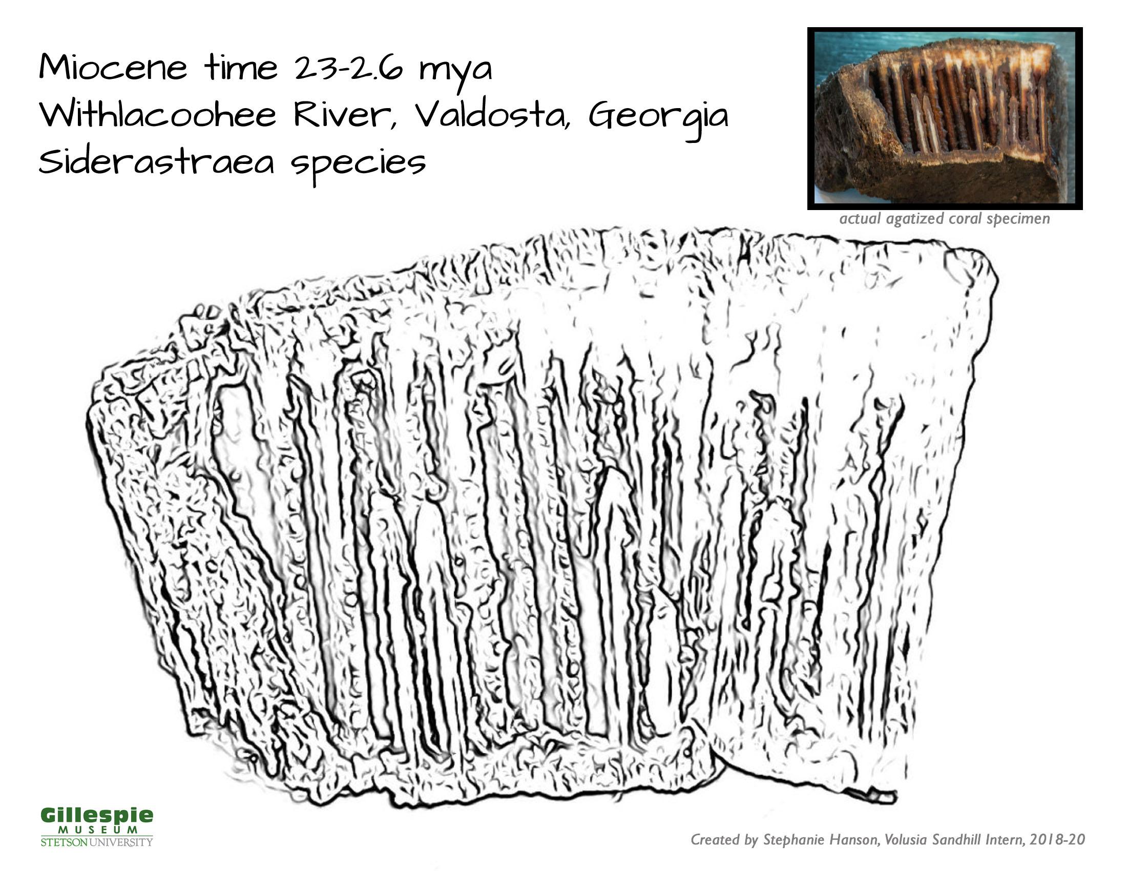 agatized coral specimen 2
