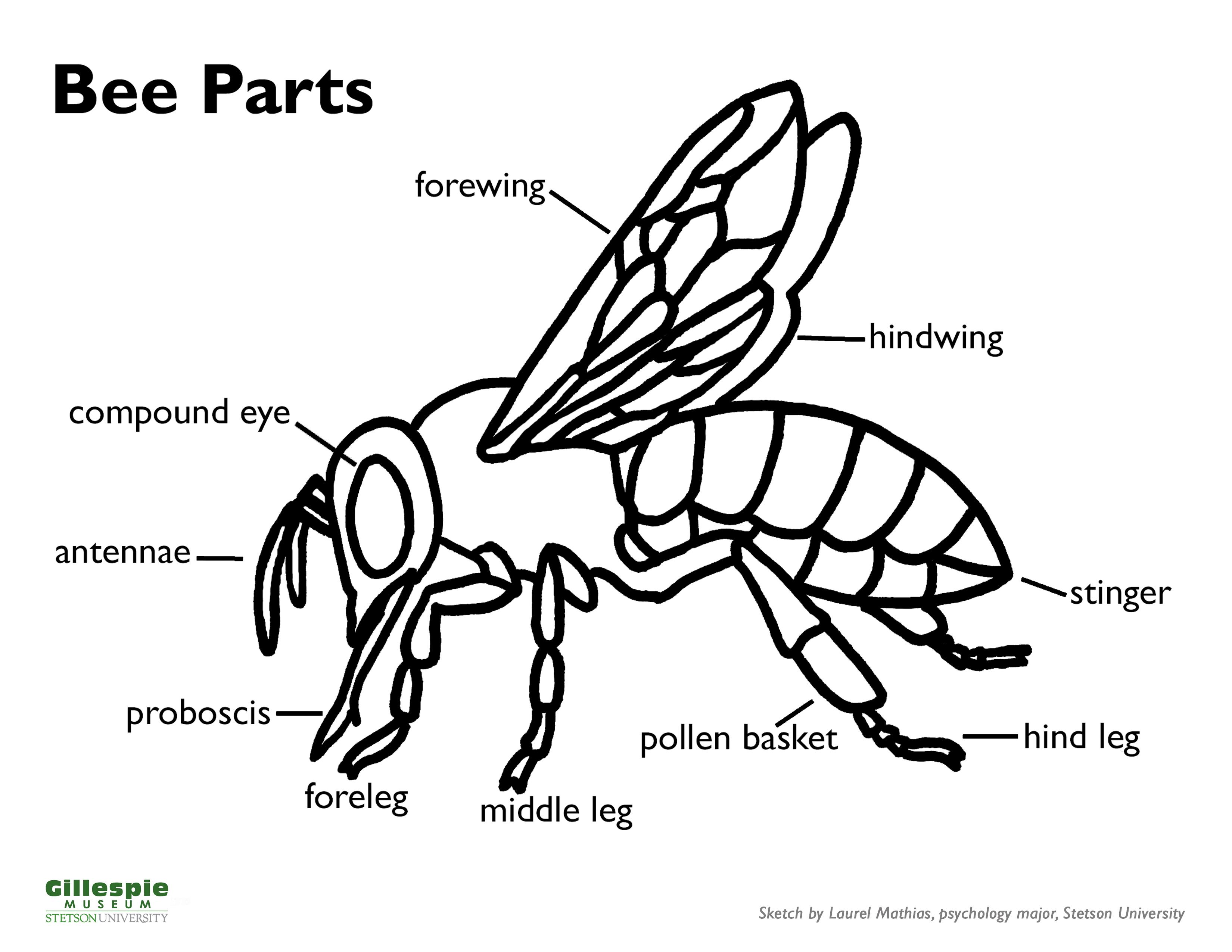 bee parts