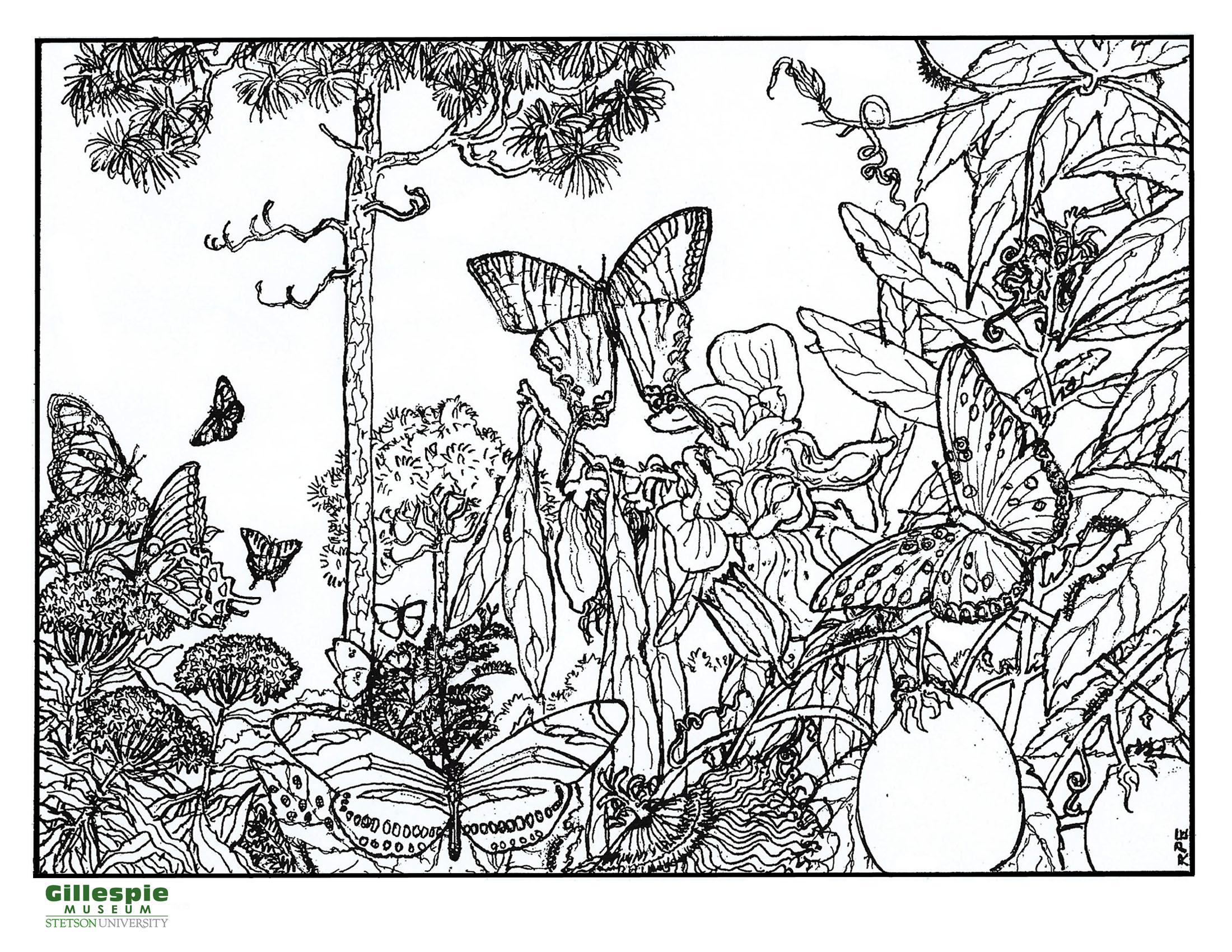 butterflies in pines