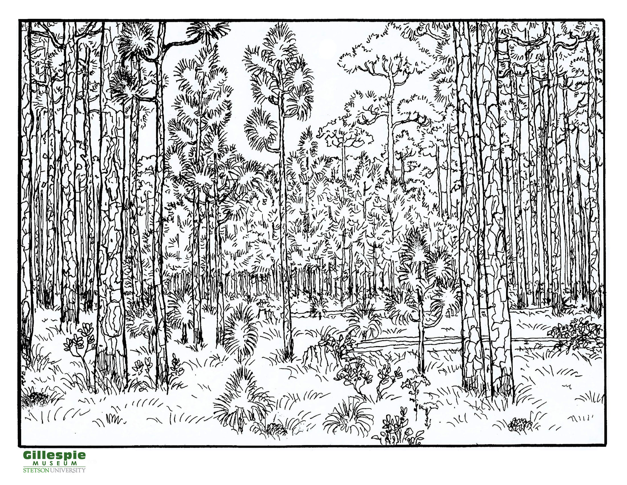 longleaf pine woods