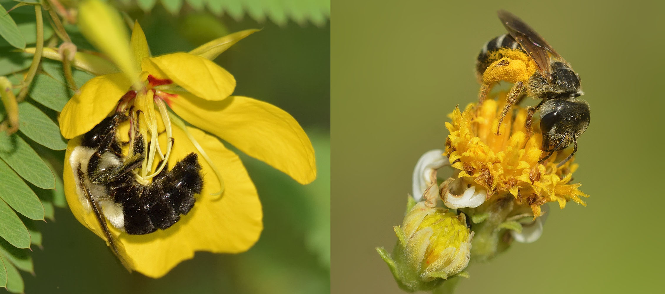 Pollinator Research