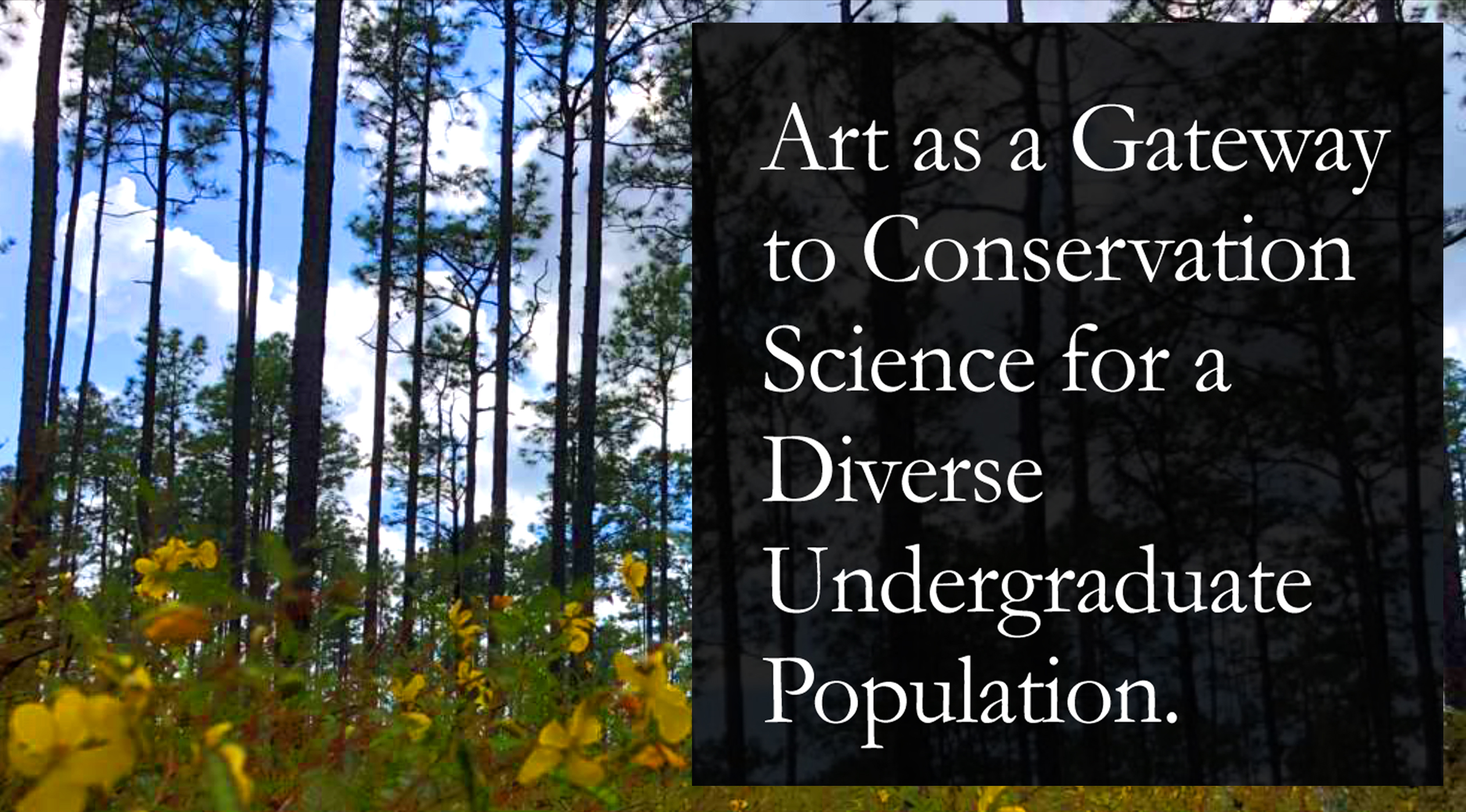 Art as a Gateway to Environmental Issues