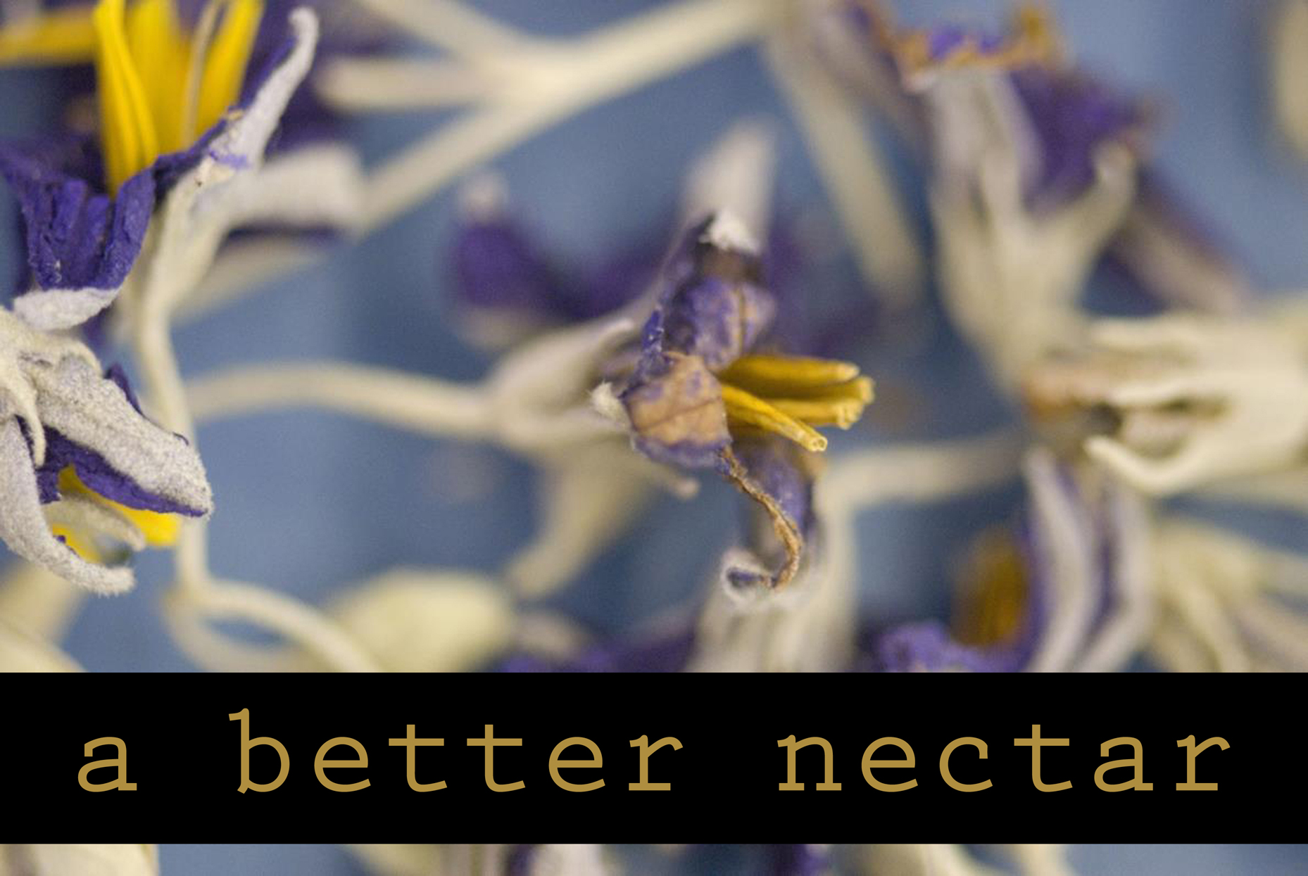 a better nectar exhibit