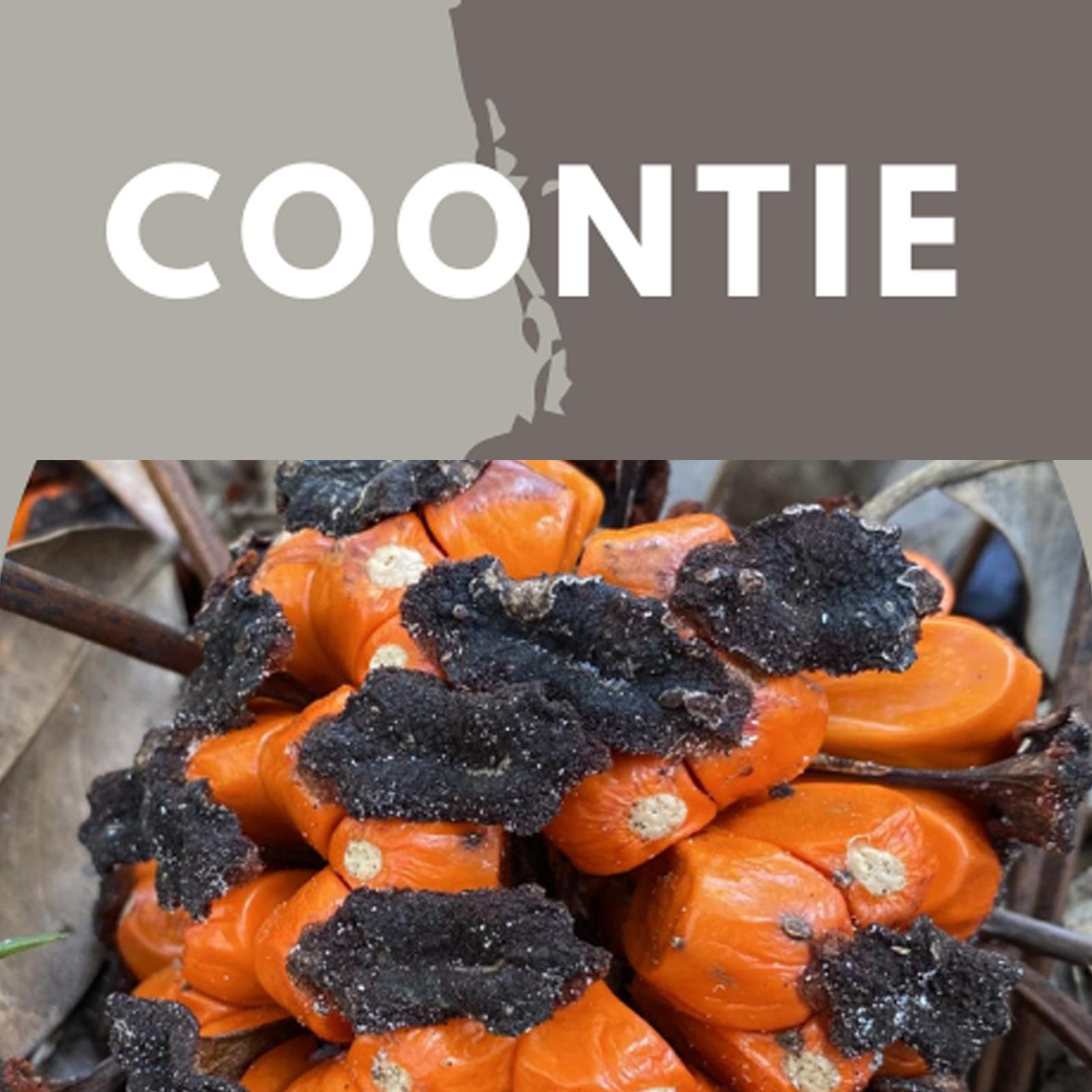 coontie