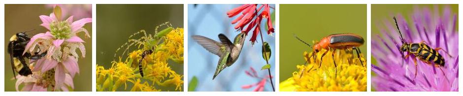 Pollinator Project pollinators