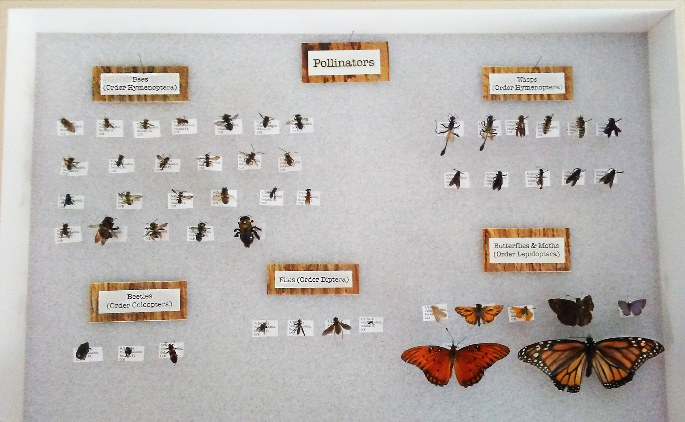pollinator collection