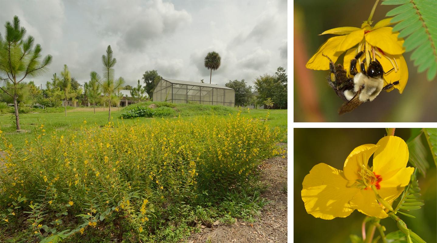 Volusia Sandhill Ecosystem and Pollinator Project