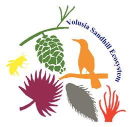 Volusia Sandhill Ecosystem