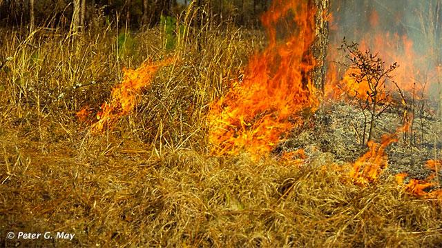 Sandhills Ground Fire