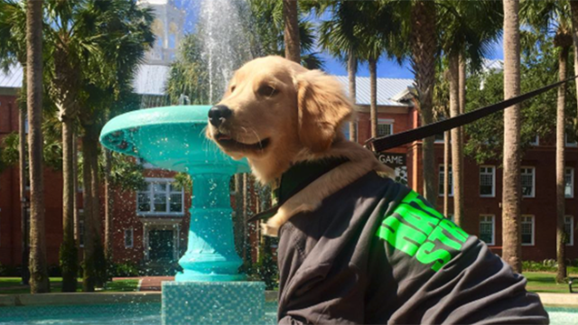 Dog by Holler Fountain